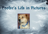 Foofer's Life in Pictures intro logo